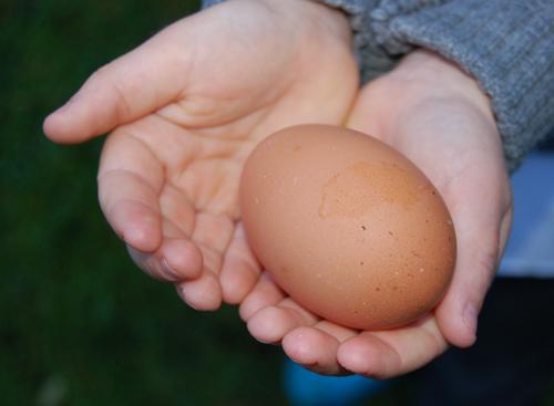 First-egg