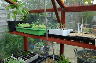 Greenhouse-staging