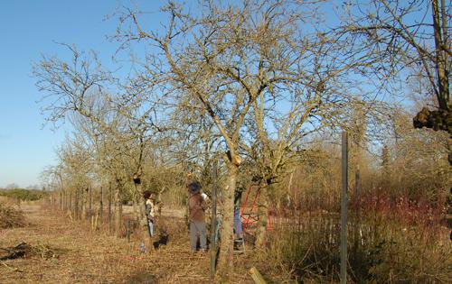 Grace&flavourtreepruning