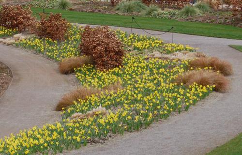 Narcissusteteatetebedatwisley