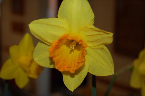 Daffodilprizewinnergrp2