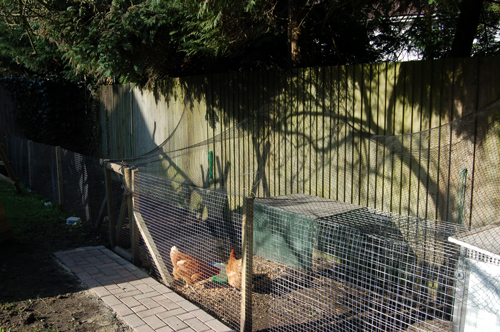 Chickenenclosure
