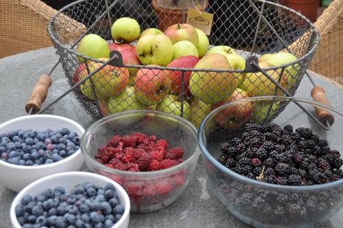 Fruitharvestaug