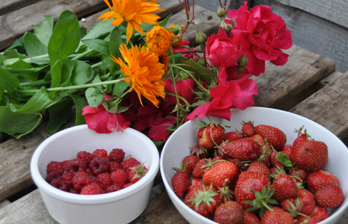 Strawberryharvest