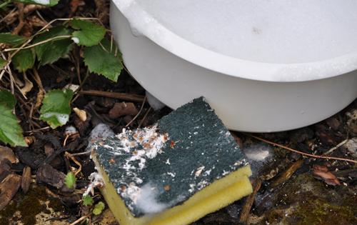 Scalesolutiongreenscrub