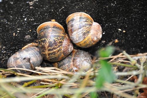Snailcollection