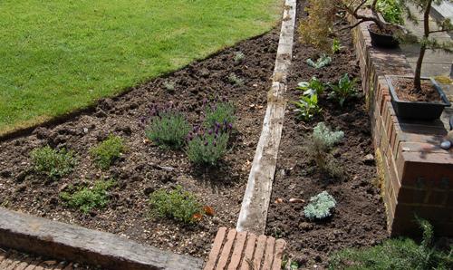 Artemisiajustplanted