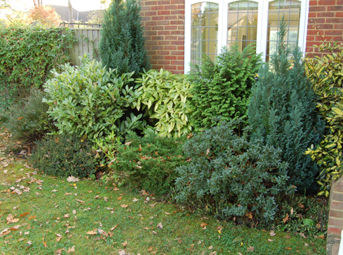 Border planting low maintenance front garden plantpassion for Low maintenance bushes for shade