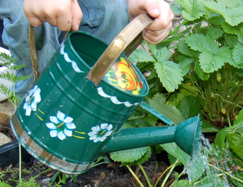 Small-watering-can
