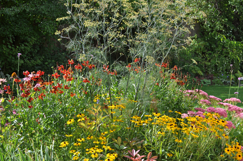 Border planting plantpassion for No maintenance garden plants