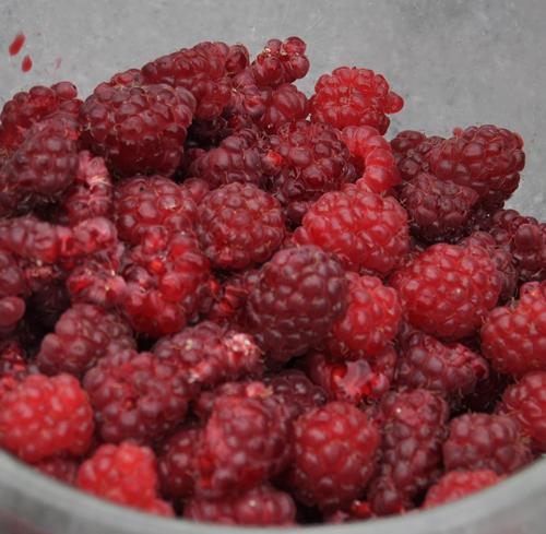 Raspberriessquare