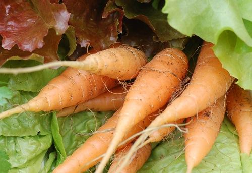 Carrotswithlettuce