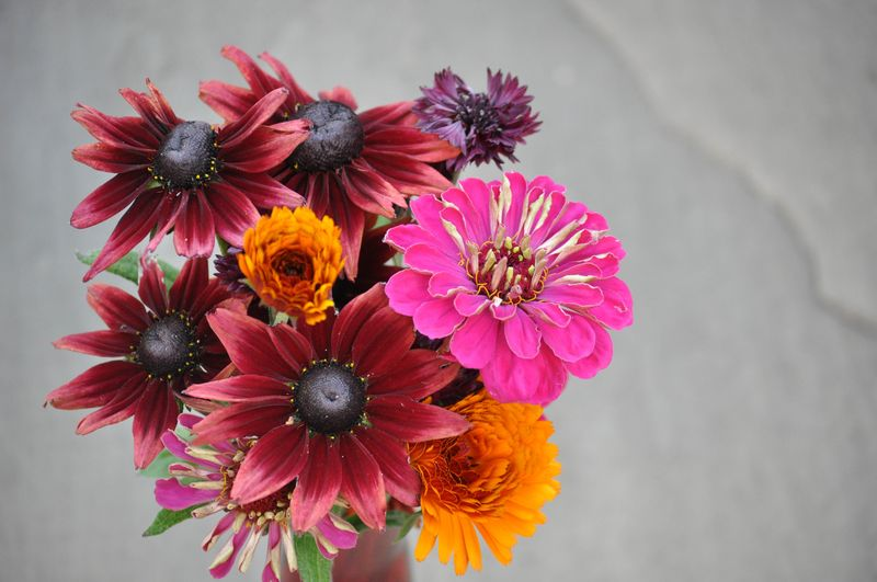 Cut flowers from allotment