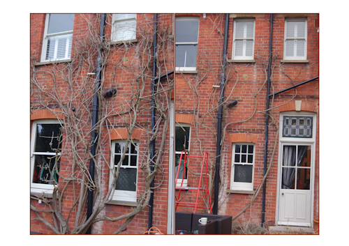 Wisteriabeforeandafter-1