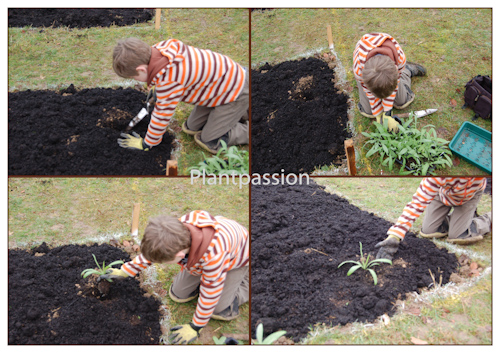 Williamfirstplanting-2