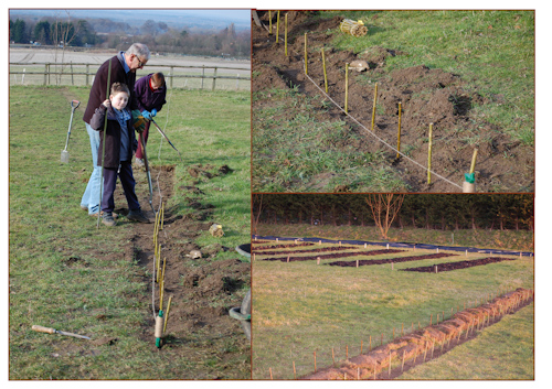 Willow planting-2