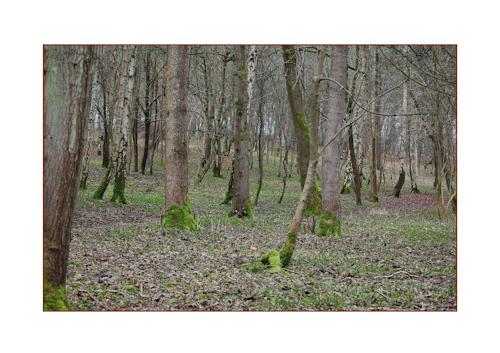 Woodlandscene-1