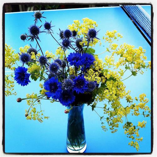Cutflowers cornflower (1 of 1)