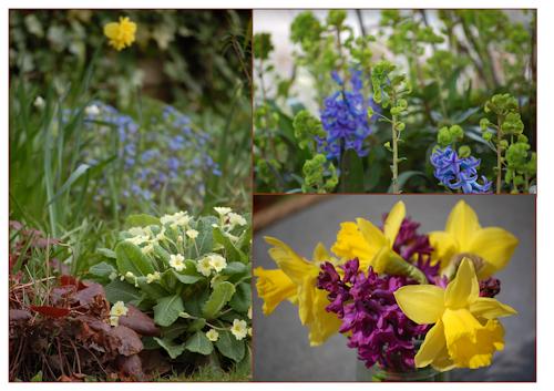 SpringflowersGBBDapril13-1