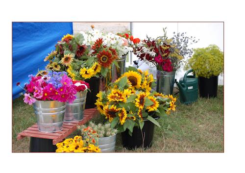 Ripley farmers market Aug 13-1