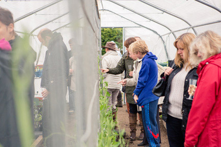 Interest in the polytunnel