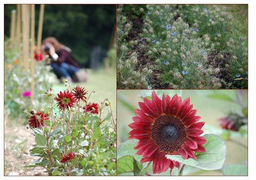 Rona vist flowers-1