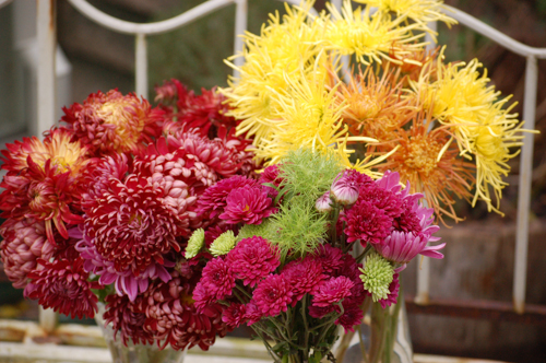 Vases of chrysanthemums (1 of 1)