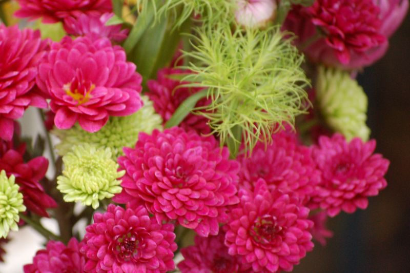 Quinty & dianthus green trick (1 of 1)