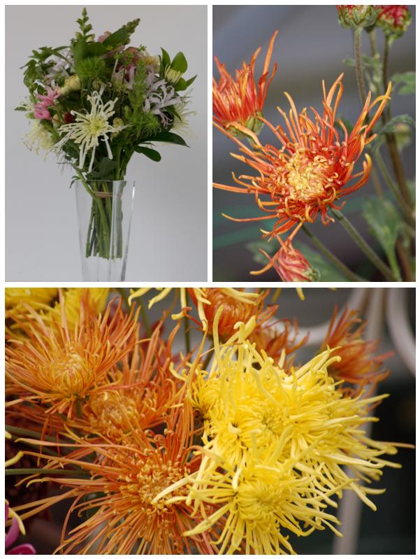 Spider chrysanthemums (1 of 1)