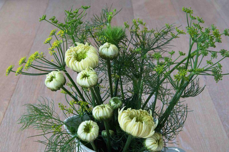 Cream Chrysanthemum (1 of 1)