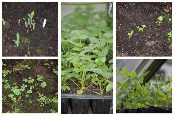 January seedlings
