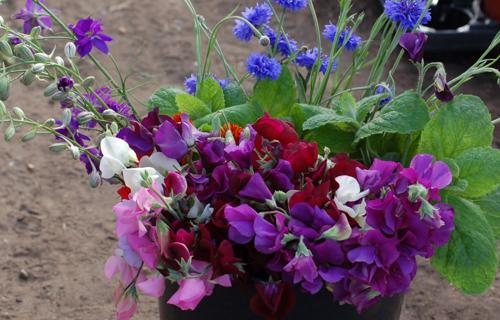 June bucket of flowers (1 of 1)