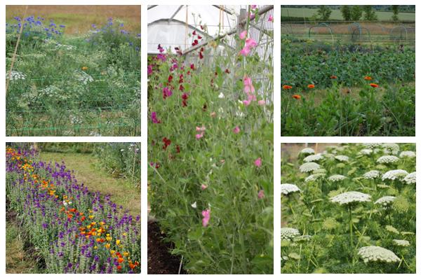Field flowers (1 of 1)
