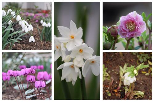 January flowers-1