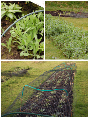 February beds 2014-1