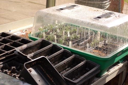 Propagator and seed trays (1 of 1)