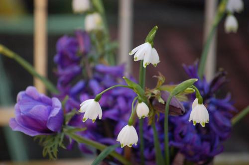 Hyacinths (1 of 1)