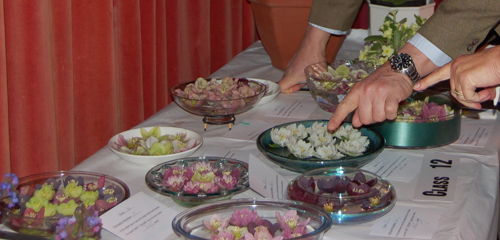 Hellebores being judged (1 of 1)