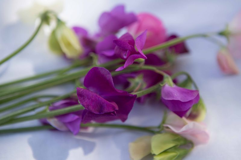 Bunch of sweet peas (1 of 1)