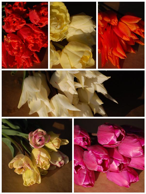 Tulipmidseasonvarieties