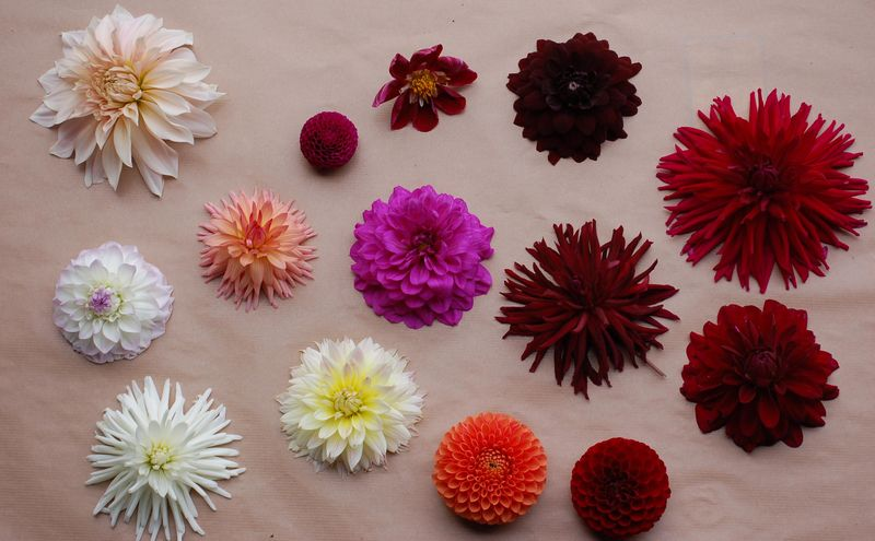 Day old dahlia heads (1 of 1)