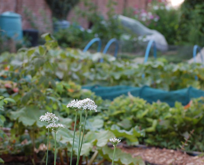 Allotment  (1 of 1)