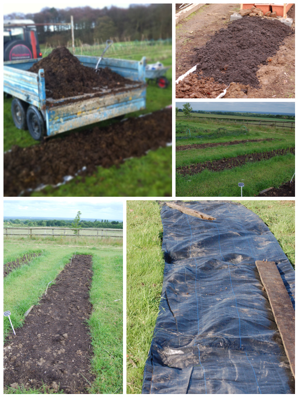 Creating no dig beds-1