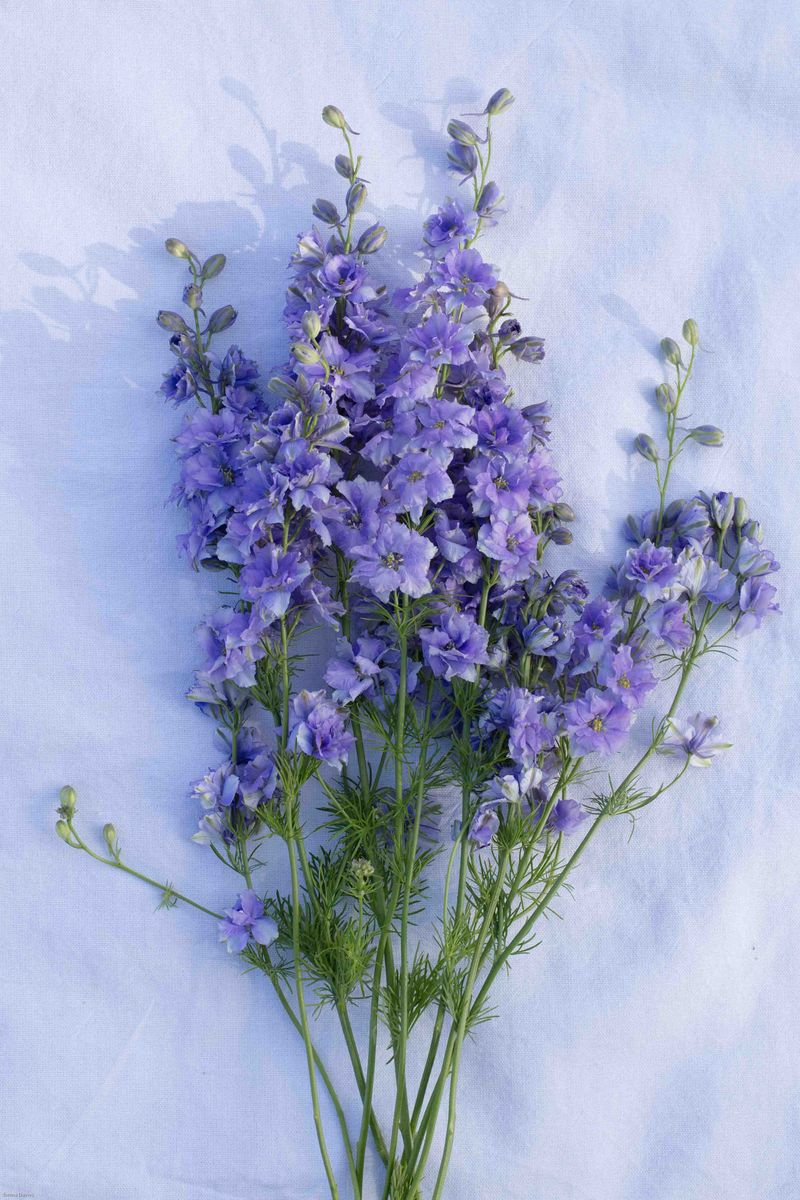 Larkspur blog (2 of 3)