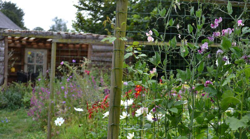 Tea garden cutting patch