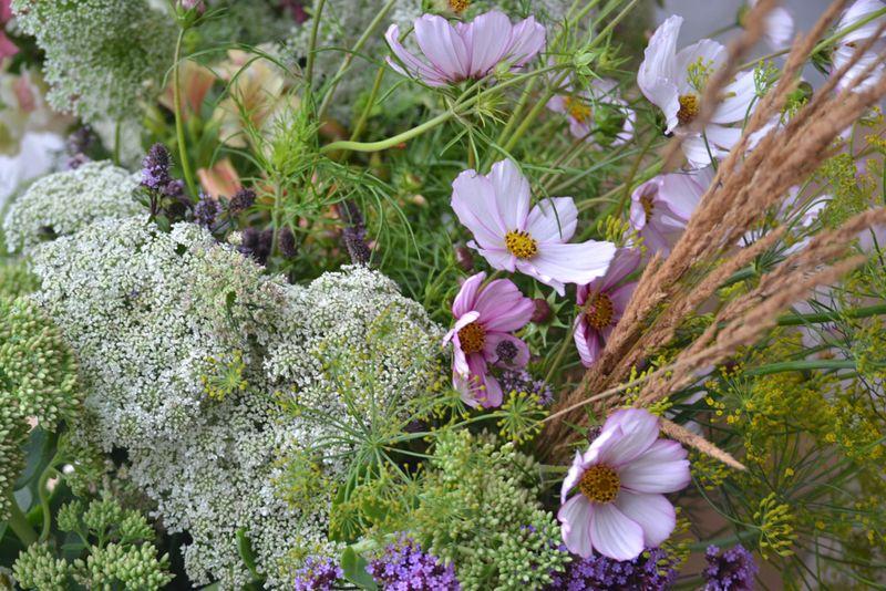 Meadow flowers with wispy bits
