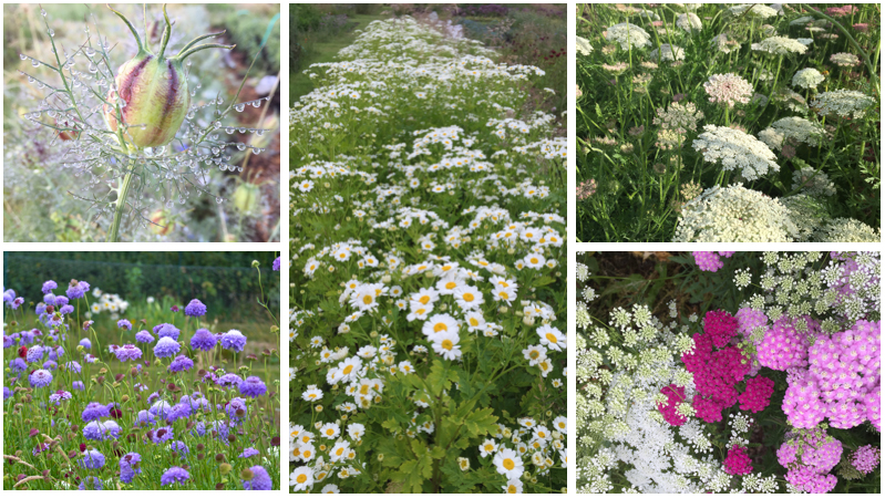 Meadow style wildflowers montage july aug