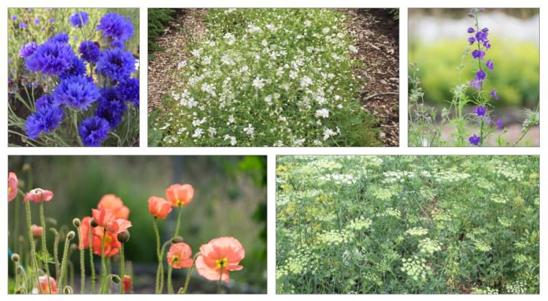 Seedlings blog flower montage