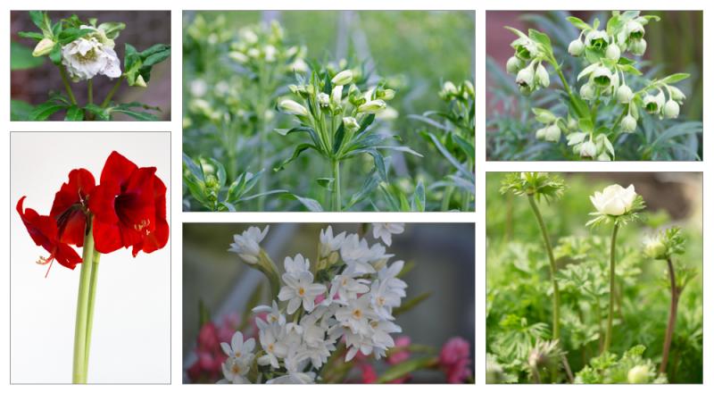 Valentine flowers montage