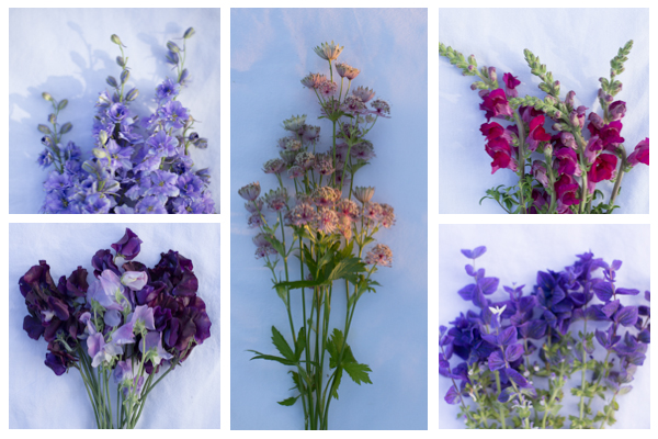 DIY box flower July montage